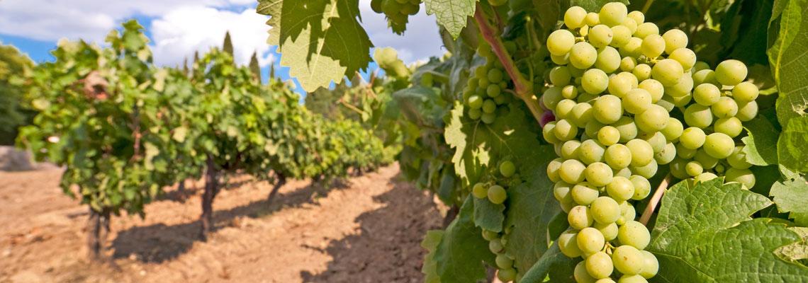 groupement viticole
